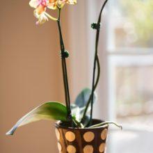 Полезные советы для женщин: выращиваем цветы дома