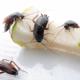 Как вывести тараканов в домашних условиях
