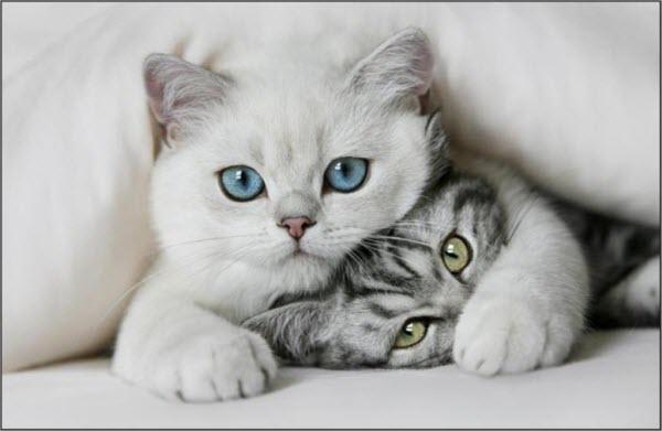 Сухой и теплый нос у кота3