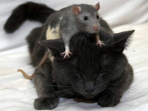 Сухой и теплый нос у кота4