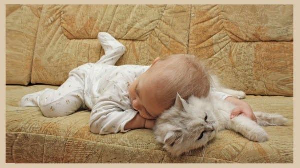 Сухой и теплый нос у кота5