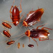 Средства от тараканов в квартире самое эффективное