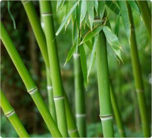 Ткани для нижнего белья бамбуковое волокно