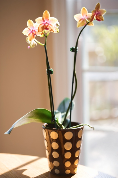 какие цветы держать дома | out-woman.ru