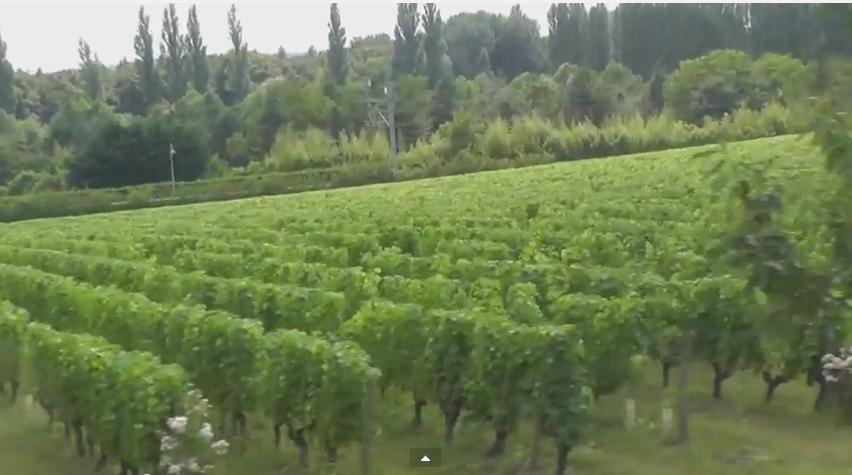 красное сухое вино польза и вред 2