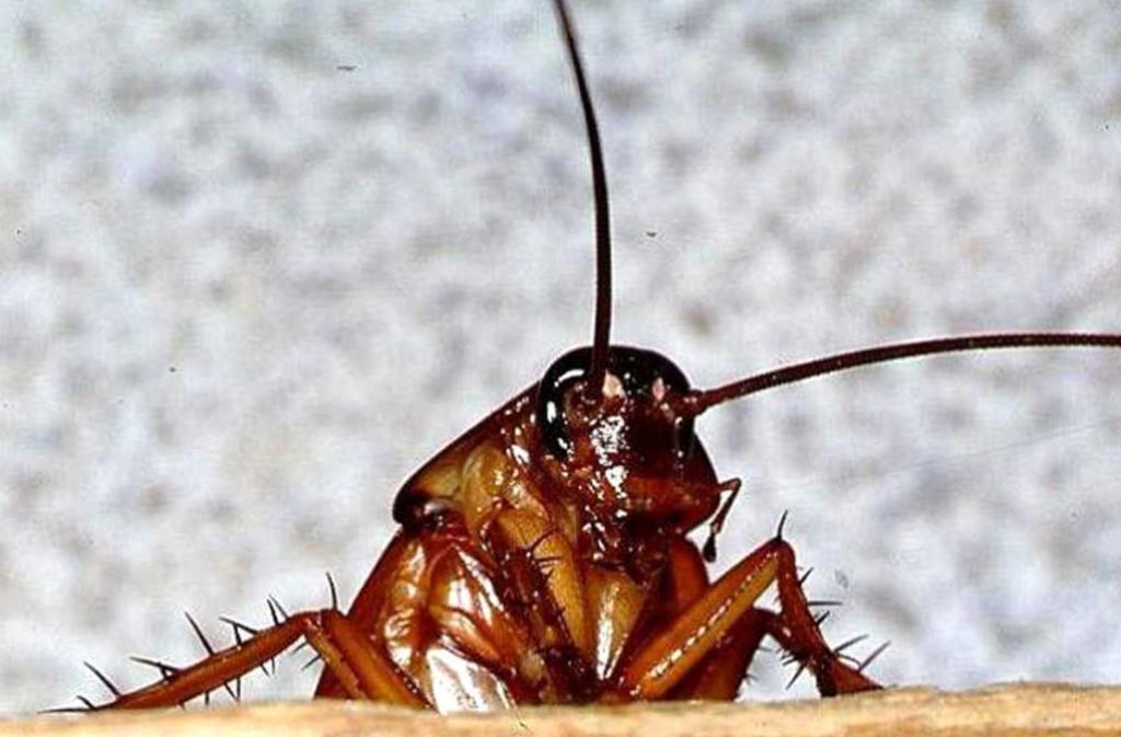Средство от тараканов_15
