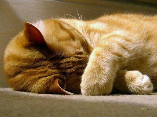 Сухой и теплый нос у кота