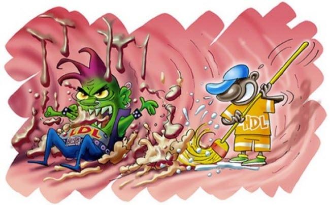 холестерин высокой и низкой плотности обозначения